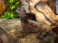 Northampton Reptile Centre